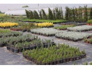 Aromatik ve Tıbbi Bitkiler Borsası Büyükçekmece'de kuruluyor