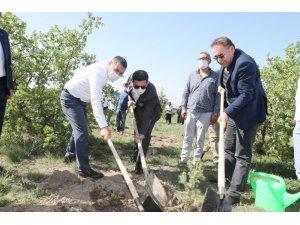 Nevşehir'de yeni doğan ve vefat edenler için 600 fidan dikildi