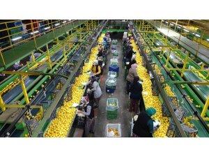 Limonda 10 bin ton ihracat sevindirdi