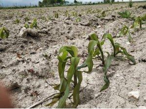 Afyonkarahisar'daki tarım arazileri zirai dondan büyük zarar gördü