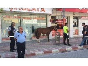 Sokağa çıkma kısıtlamasında uygulamaya bu kez sahipsiz at takıldı