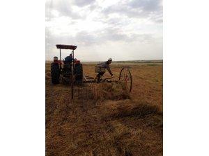 Çınar'da yılın ilk mercimek hasadı yapıldı