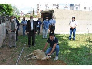 Aydın'ın 17 ilçesinde Cuma namazı öncesi şükür kurbanı kesildi