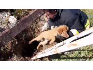 Çukura düşen yavru köpek itfaiye tarafından kurtarıldı