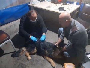 Hakkari'de zehirlenen köpek tedavi altına alındı