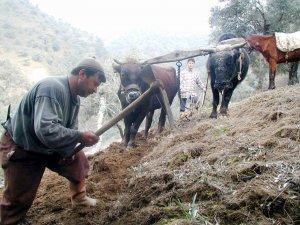 Tarım Müdürlüğü ve Ziraat Odası'ndan çiftçilere ÇKS uyarısı