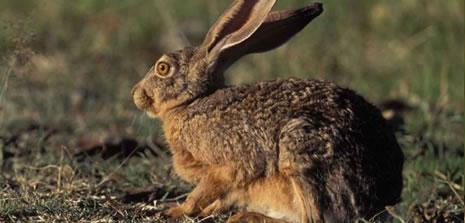 Tavşan avına 10 bin TL ceza