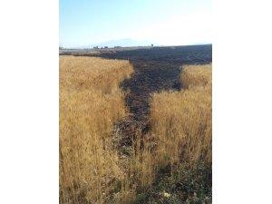 Karaman'da çıkan yangında 19 dekarlık buğday tarlası kül oldu