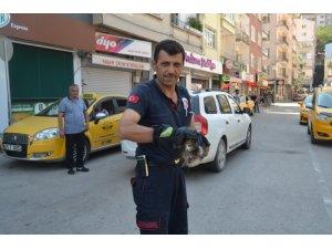 Amasya'da itfaiyecilerin kediyle imtihanı
