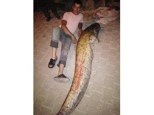 Oltayla 48 kilogramlık yayın balığı yakaladı