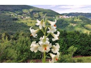Bu çiçeği kopartmanın cezası 73 bin lira