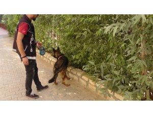 Kızıltepe'de dedektör köpek 'Eros' uyuşturucuya geçit vermiyor