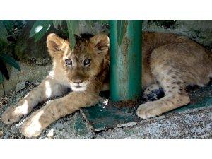 Rezidanstan hayvanat bahçesine