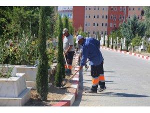 Karaman Belediyesi, şehir mezarlığına 500 adet kara selvi ağacı dikti