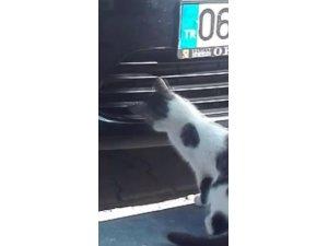 Kedinin serçe avı böyle görüntülendi