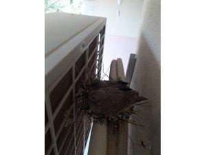 Kuş yuva yapınca klimalarını çalıştırmadılar