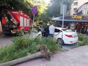 Devrilen ağaç otomobilin arka camını patlattı