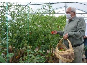 Başkan Posbıyık, Ata Tohumu Projesinde ilk hasadı yaptı