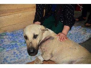 Kesici aletle yaralanan sokak köpeğini mahalleli tedavi ettirdi