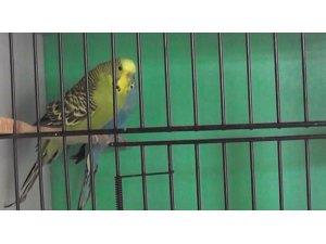 ADÜ Veteriner Fakültesi'nde kafes kuşlarına özel bakım