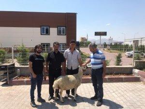 Kayseri'de Ayasofya için kurban kesildi