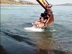 Bodrum'da kepçeli deniz keyfi