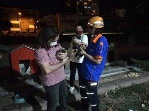 Yavru köpekler ölmeden kurtarıldı
