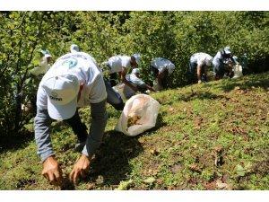 Mevsimlik fındık işçilerinin çalışma koşulları belli oldu