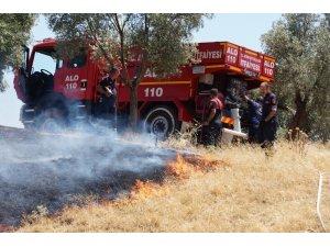 Aydın'da 4 dönüm zeytinlik alan yangında zarar gördü