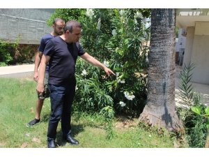 Üst katların manzarasını kapattığı gerekçesiyle kesilen palmiye ağacı site sakinlerini isyan ettirdi