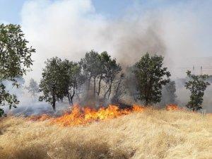 Diyarbakır'da ağaçlık alanda yangın, 300 dönümlük alan kül oldu