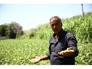 Büyükşehir Belediyesi 5 ton bamya satın aldı