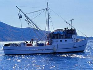 Kaçak avlanan 36 balıkçı teknesine el konuldu