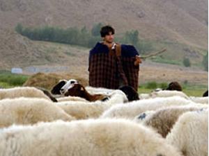 Çocuk çobanın gizemli ölümü