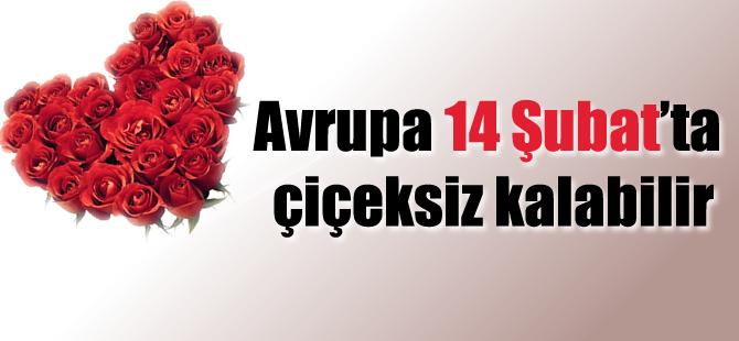 Avrupa 14 Şubat'ta çiçeksiz kalabilir