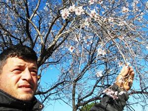 Havran'da bademler çiçek açtı