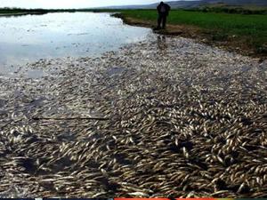 Manyas'ta balıklar karaya vurdu
