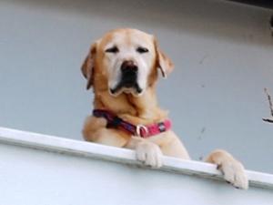 Köpeğin dilekçesi kabul edildi
