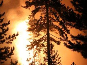 20 dönümlük alan zarar gördü. Yangının çıkış nedeniyle ilgili soruşturma başlatıldı.