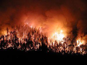 Çan'da Orman Yangını