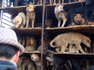Hayvan hakkı ihlallerine 274 bin 733 lira ceza