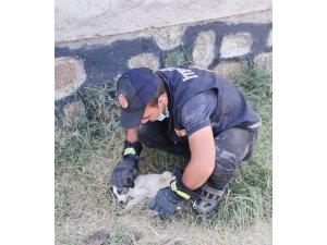 Rögara düşen yavru köpeği itfaiye ekipleri kurtardı