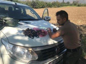 Aydın'da 4 avcıya 20 bin TL ceza