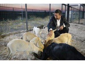 Başkan Arı, Hayvan kasabasında incelemelerde bulundu