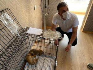 Ölüme terk edilen yavru köpeklere Pursaklar Belediyesi sahip çıktı