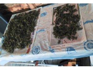 Kenevir imalathanesine operasyon: 1 tutuklama