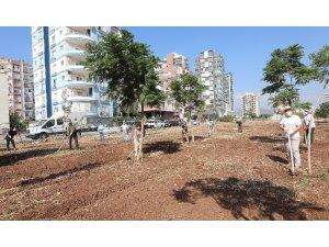 Mezitli'de Avrupa Hareketlilik Haftası'nda ağaçlara bakım yapıldı