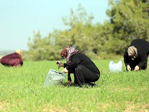"""Köylüler """"organik pazarla"""" kazanıyor"""