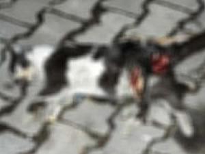 Çanakkale'de kedi vahşeti!