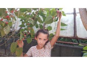 Fethiye'de Ekim ayında meyve veren dut ağacı şaşkınlık oluşturdu